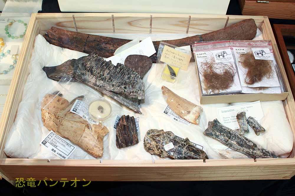 パレオサイエンス この無造作に並んだ化石、一つ一つが相当のお値打ち品です。