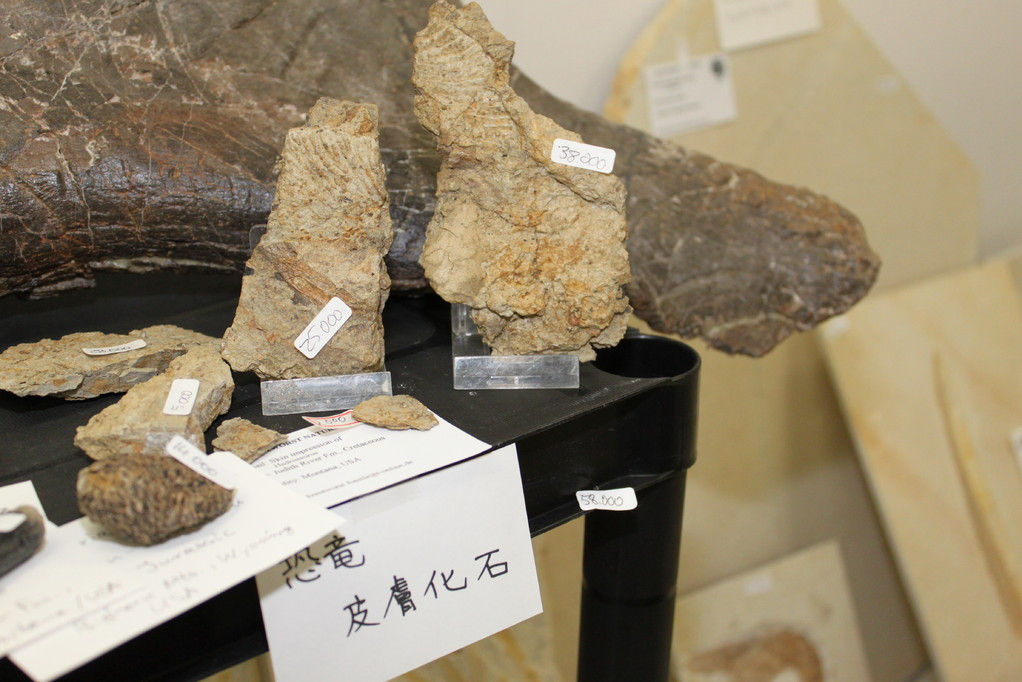Krautworst Naturstein 恐竜皮膚化石