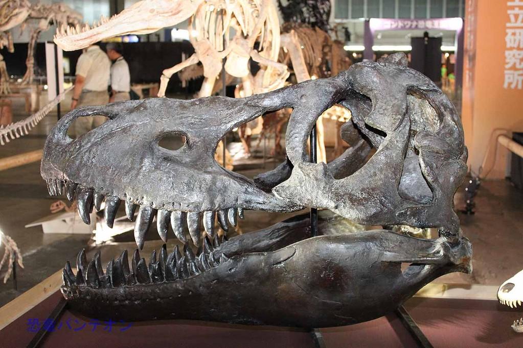 タルボサウルス頭骨