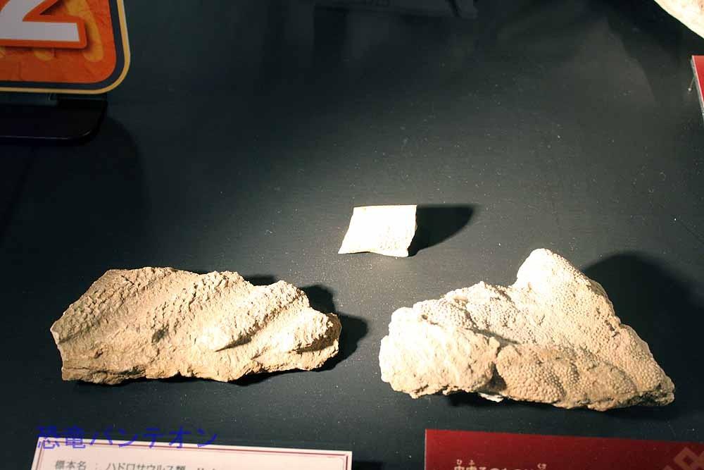 サウロロフスのものと考えられる皮膚印象化石