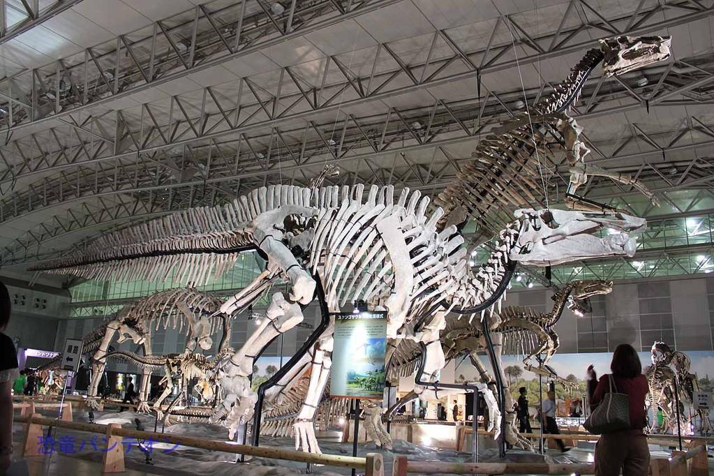 ズケンゴサウルス全身骨格