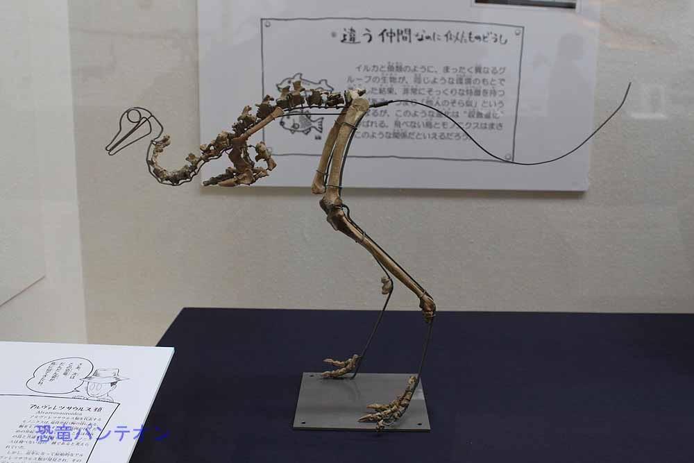 8.鳥と間違われた恐竜 モノニクス