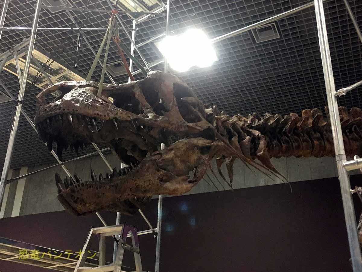 ティラノサウルス、スコッティ