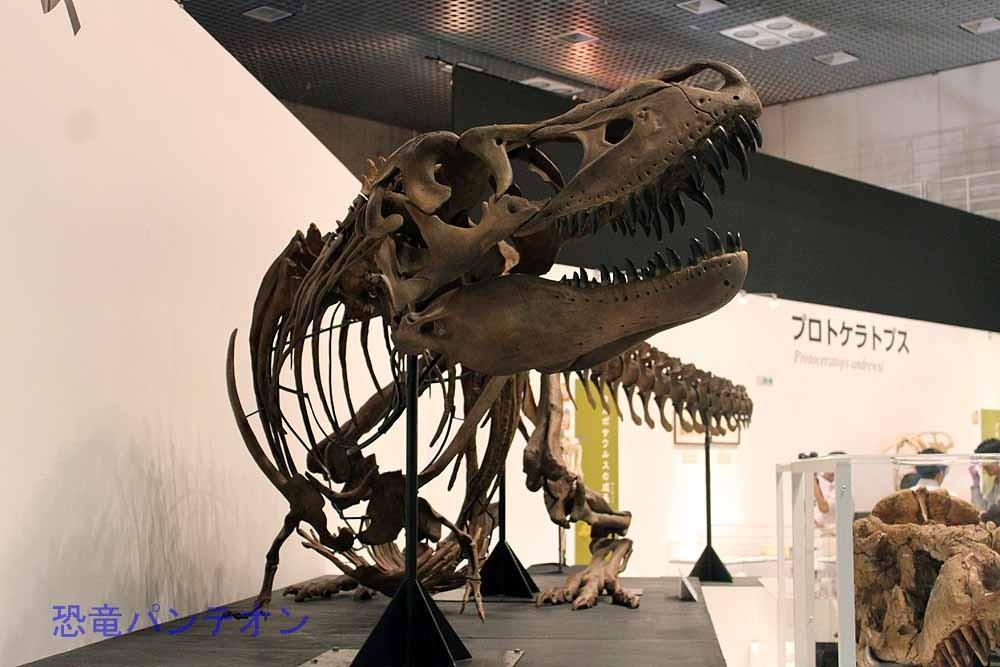 タルボサウルス全身骨格(レプリカ) 正面から