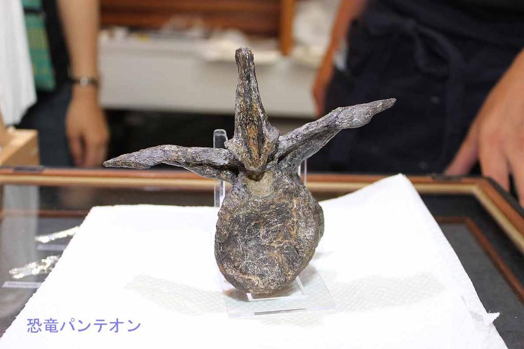 パレオサイエンス アロサウルスの尾椎骨 15万円