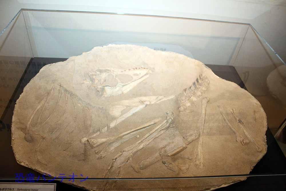 タルボサウルス全身骨格(複製)