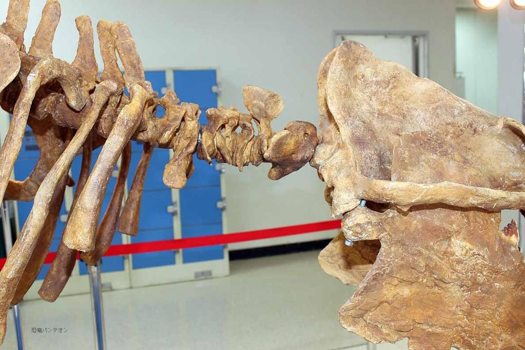 バシロサウルス頸椎