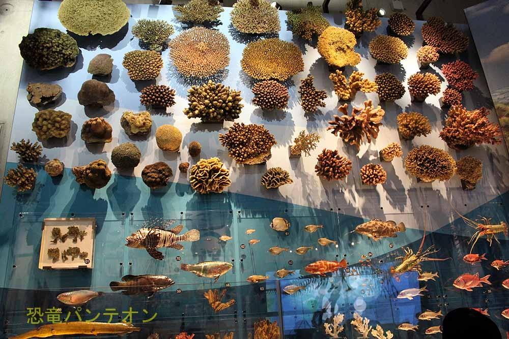 展示室周囲外側の壁には海洋生物