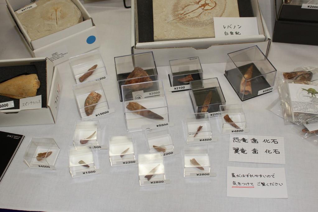 Zoic Srl 恐竜歯、翼竜歯