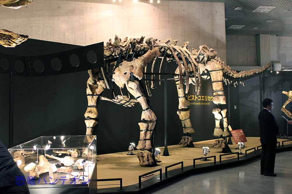 オピストコエリカウディア全身骨格(実物化石)