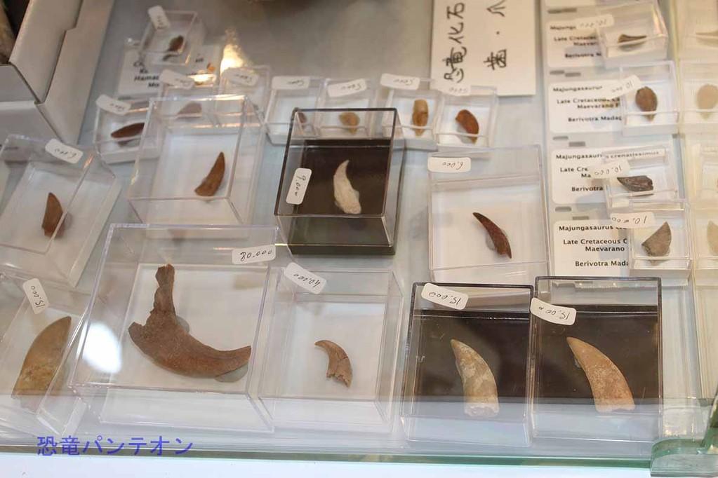 Zoic Sri 恐竜歯、爪化石