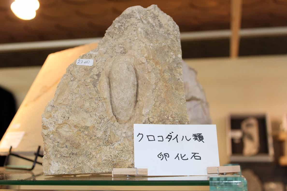 Zoic Srl クロコダイル類 卵化石