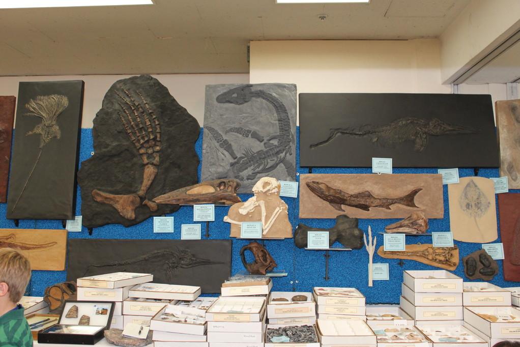 Treasures Of The Earth Ltd 海生爬虫類のレプリカ