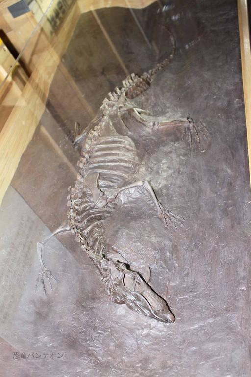 主竜形類、エウパルケリア類、トゥルファノスクス