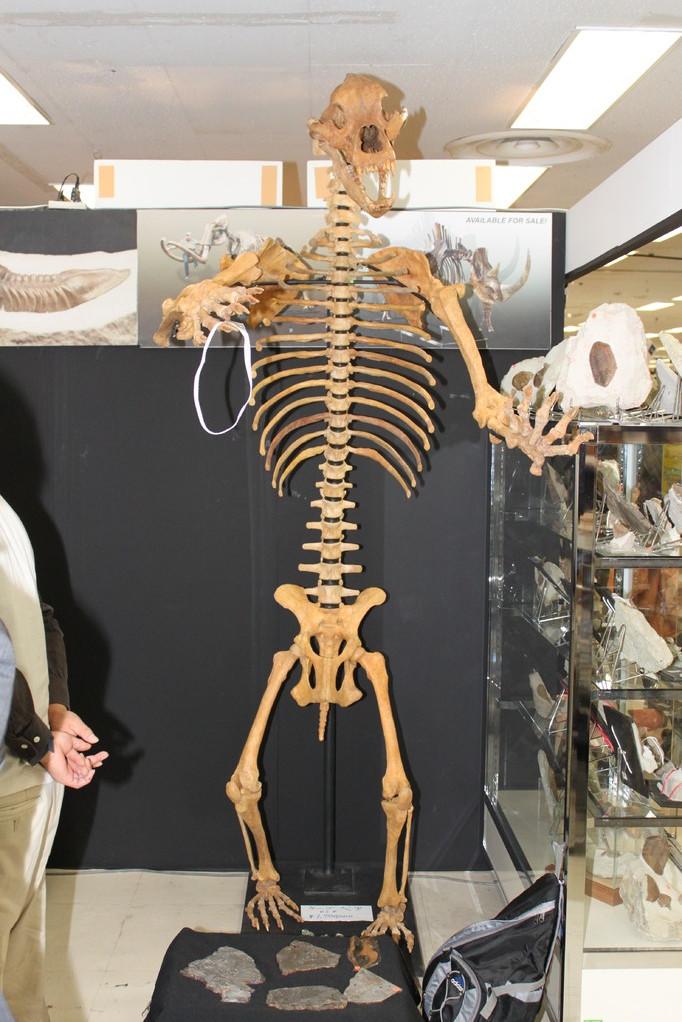 St.Petersburg Paleontological Laboratory ブース内にはホラアナグマも。