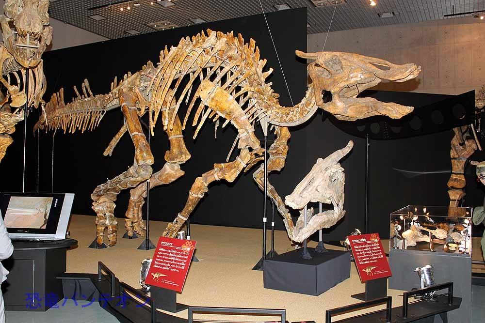 サウロロフス全身骨格(実物化石)