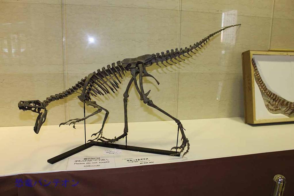 第二会場 オルニトレステス骨格 初のレプリカ 150万円 Zoic Sri で頭骨のみ4万円台売っていましたが完売。予約はできるようです。
