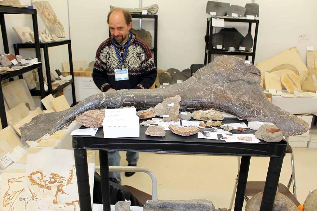 ディプロドクスの坐骨。咬まれた痕付き。モリソン層。ジュラ紀後期 ビッグホーンマウンテン ワイオミング州産