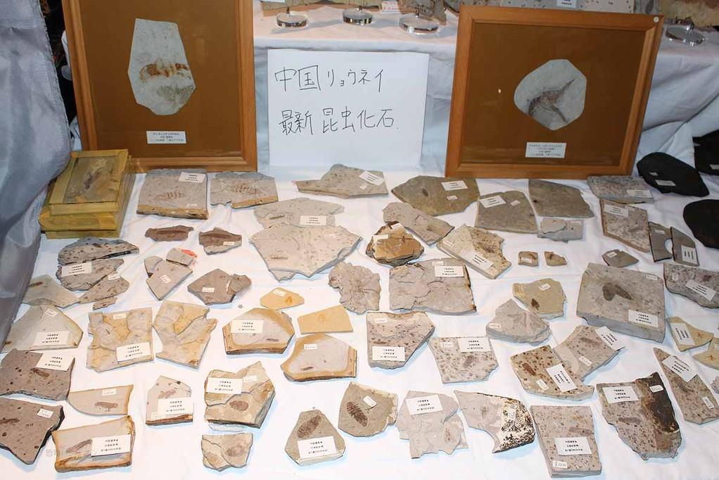 周益雅石社 遼寧の最新昆虫化石 非常に保存の良いものが2,000円から。万単位のものが多いです。