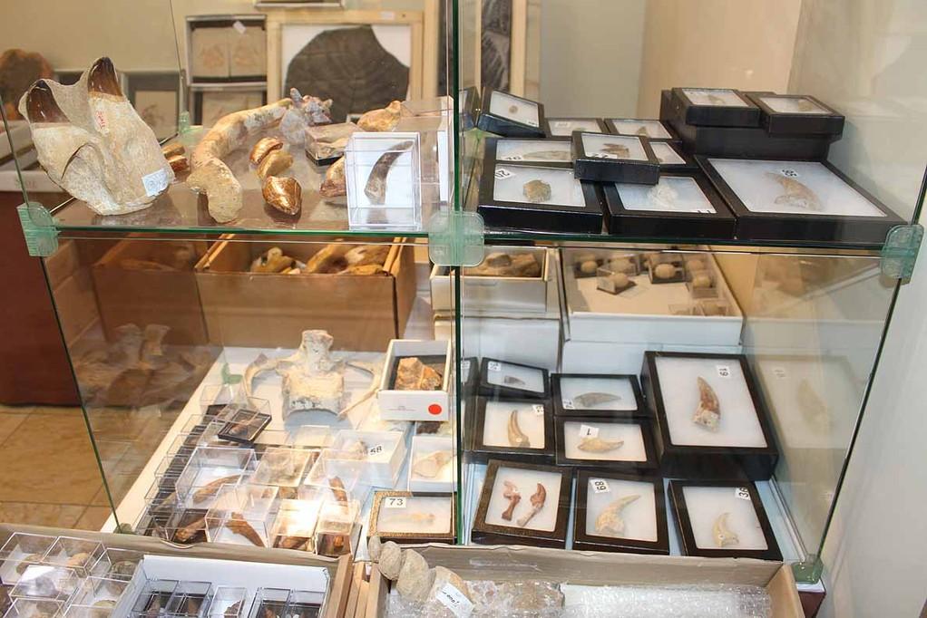 Zoic Srl (A-2)イタリア ガラスケースの左上、湾曲した骨が何か、数人で判定。ある方は上腕骨ではないかと言い、でもカーブしているのが気になる・・・正解はアベリサウルス科のルゴプスの大腿骨だそうです。ルゴプスの歯、尾椎、スピノの尾椎、ガリミムスの椎骨(肋骨つき)などいろいろあります