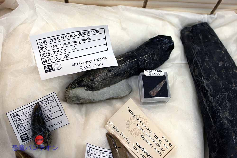 カマラサウルス歯化石32万円ほか
