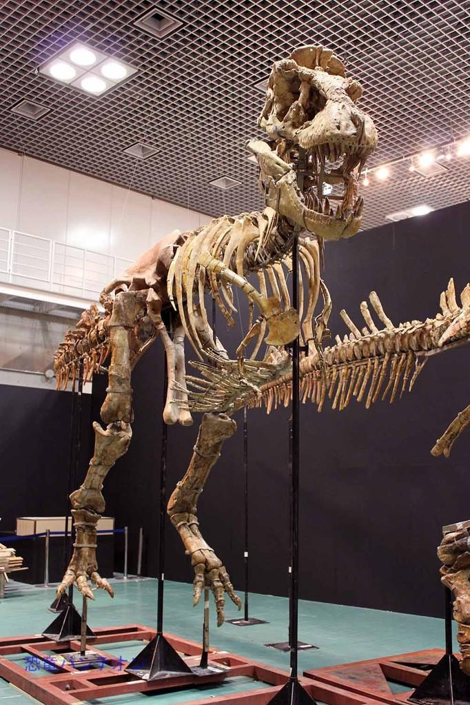 組みあがったタルボサウルス