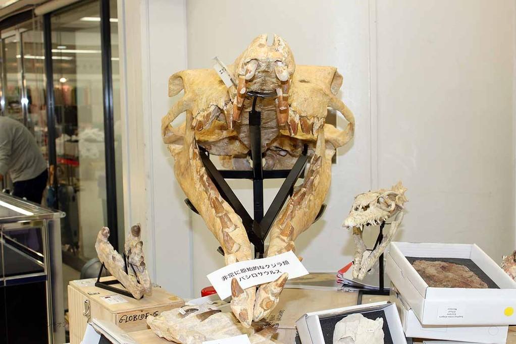 バシロサウルス正面
