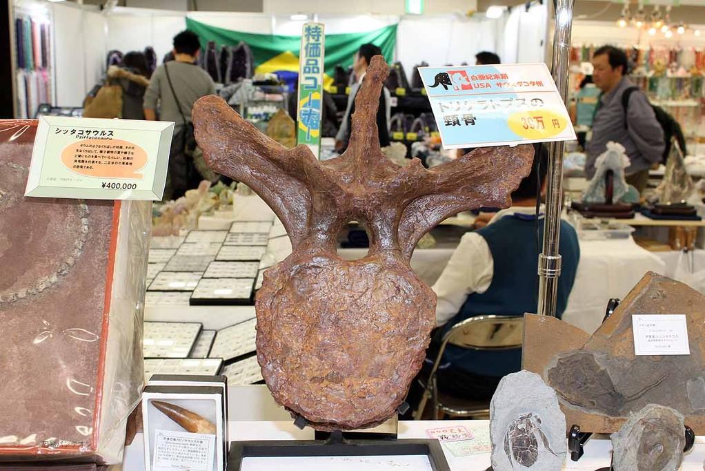 トリケラトプスの頸骨 39万円