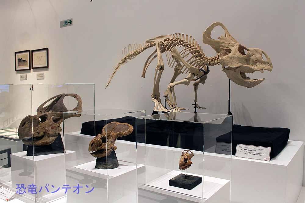 プロトケラトプスの成長