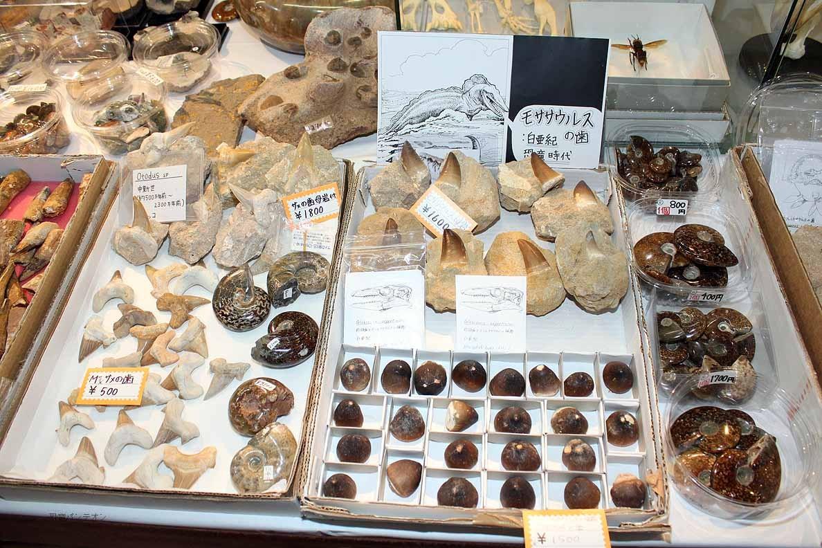 (有)ミュージアム インポート SB-2 モササウルスやスピノサウルスの歯が豊富です。