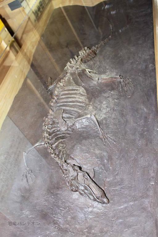主竜形類エウパルケリア類、トゥルファノスクス。原始的な羽毛を持っていたかもしれないとのこと