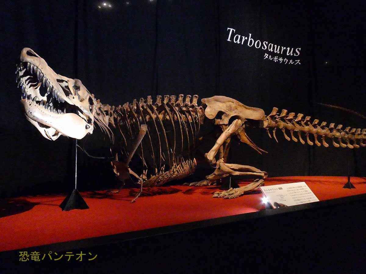 デイノケイルスにすくむ(?)タルボサウルス
