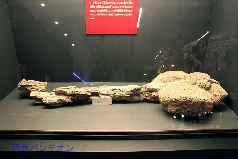 アンキロサウルス類尾椎