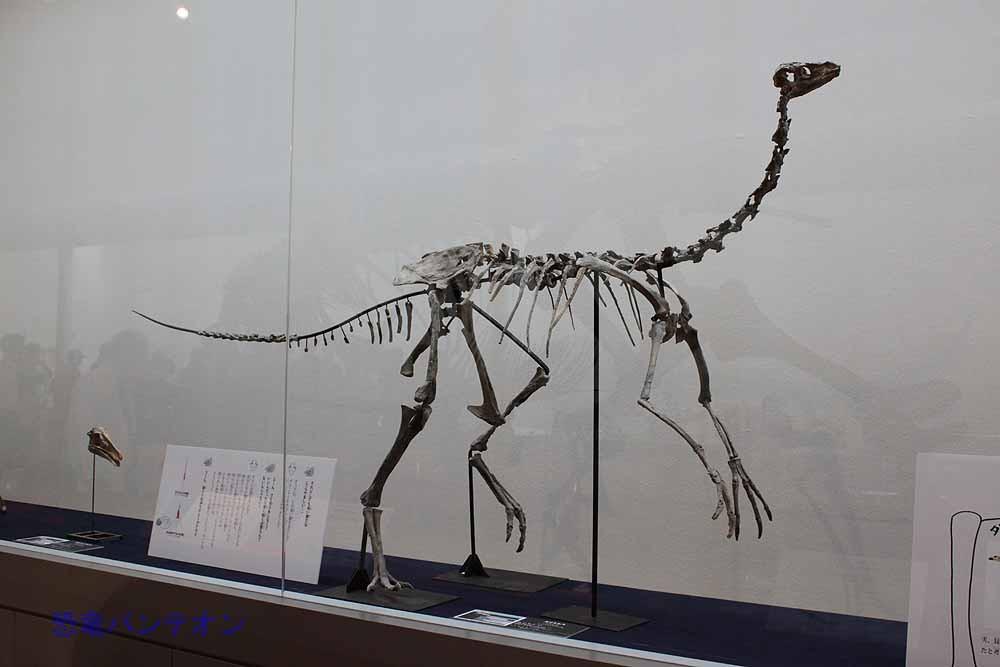6.スピードを極めた恐竜(オルニトミモサウルス類) ガリミムス