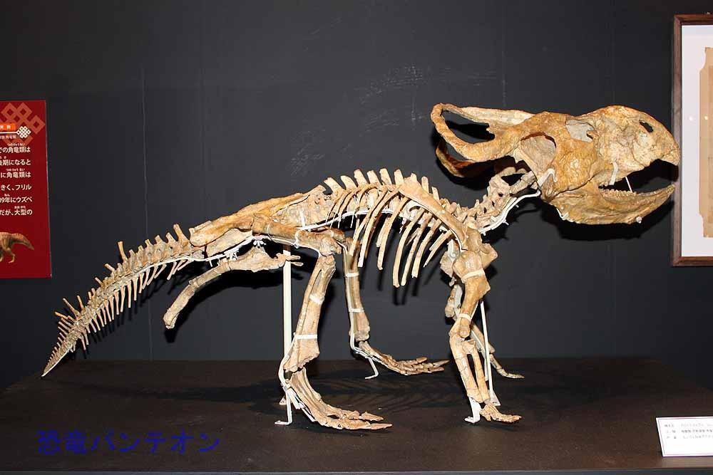 プロトケラトプス全身骨格