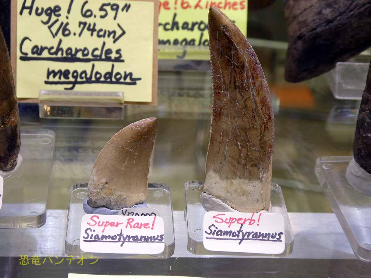 シャモティラヌスの歯