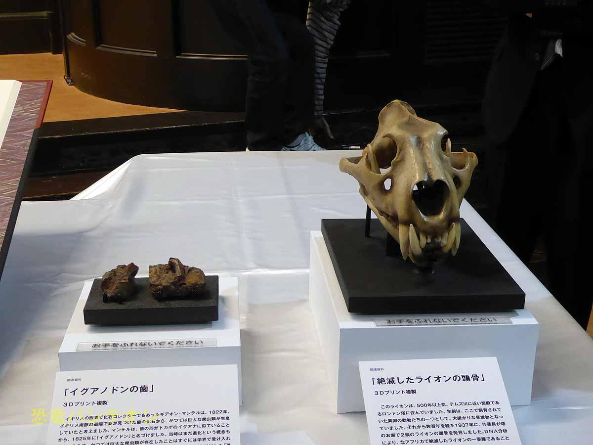 イグアノドン歯とライオン頭骨 3Dプリンタによるレプリカ
