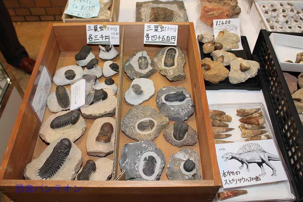 ミュージアム インポート 値段の割にお買い得感のあるスピノサウルス歯 700円から