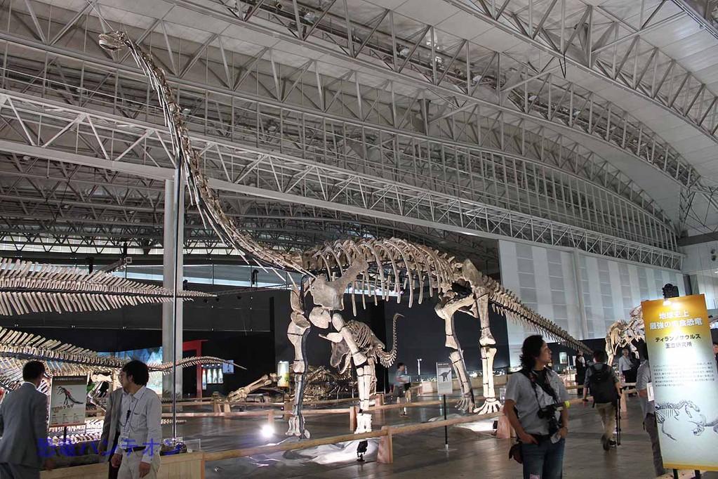 現在研究中の諸城竜脚類。ティタノサウルス類?とされています。