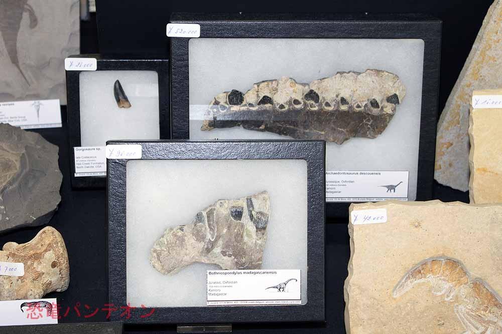 Roland Juvyns マダガスカル産の恐竜の歯があります