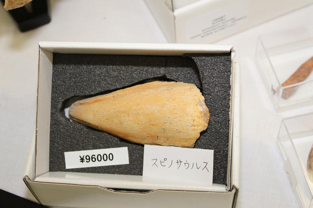 Zoic Srl スピノサウルス歯96,000円
