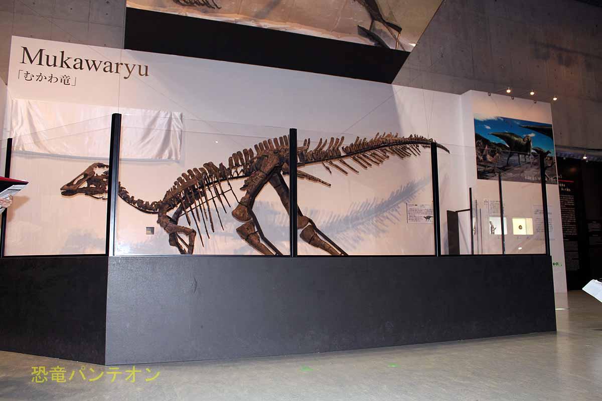 学名発表前、骨のトサカがつく前のむかわ竜