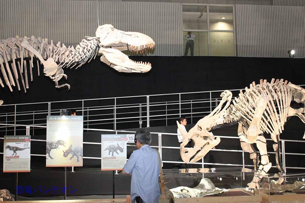 ズケンティランヌス vs. シノケラトプス