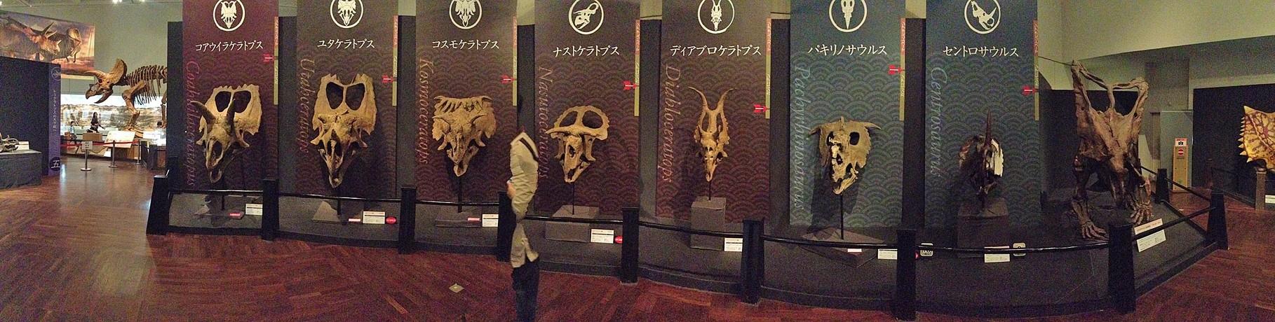 恐竜戦国時代を象徴する、ララミディア大陸のケラトプス科恐竜たち。まるで各陣営の兜のように並んでいます。パノラマ写真なので一直線に見えますが、本当は半円周状に観客を取り囲んでいます。