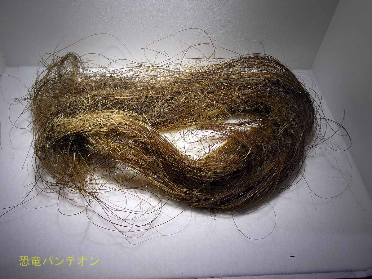 マンモスの毛