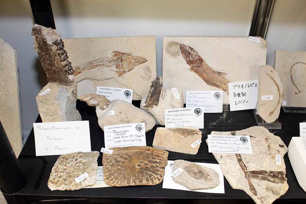 白亜紀の魚類化石ほか