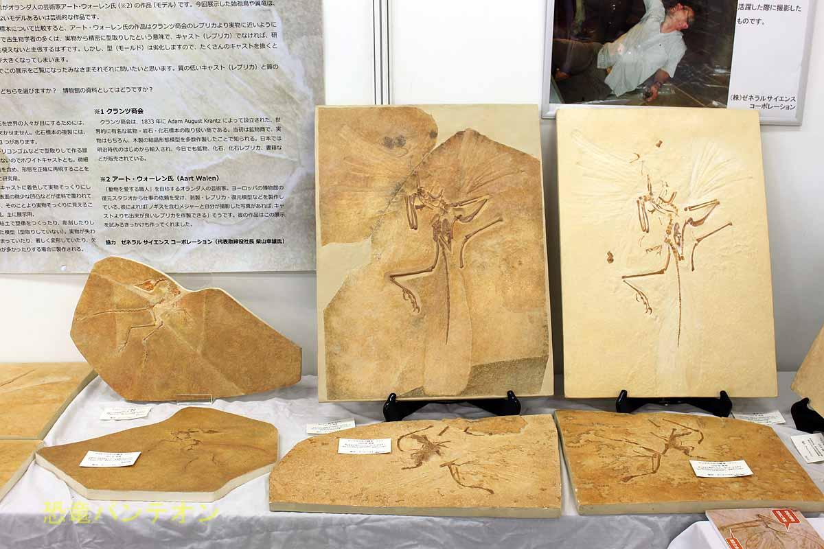ゼネラスサイエンスコーポレーションン。始祖鳥化石展やっています!