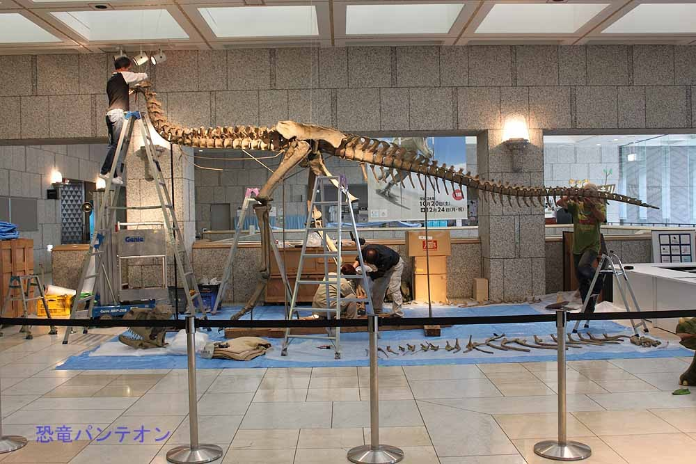 カルノタウルスの脚や背骨は組みあがっていますが、肋骨や頭骨はこれから。