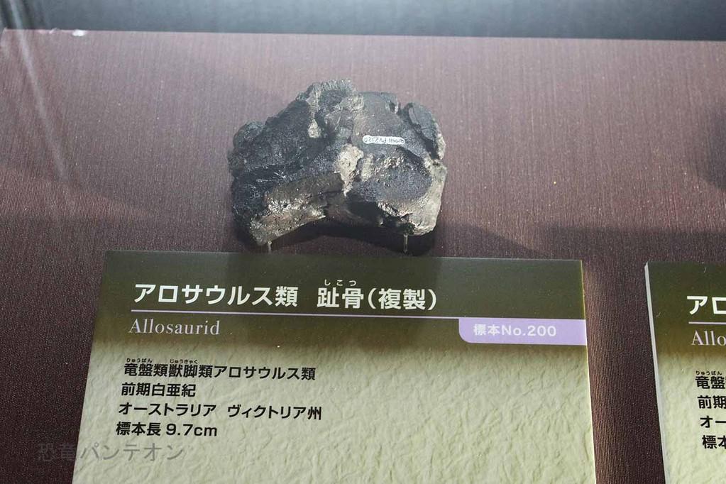 アロサウルス類 趾骨