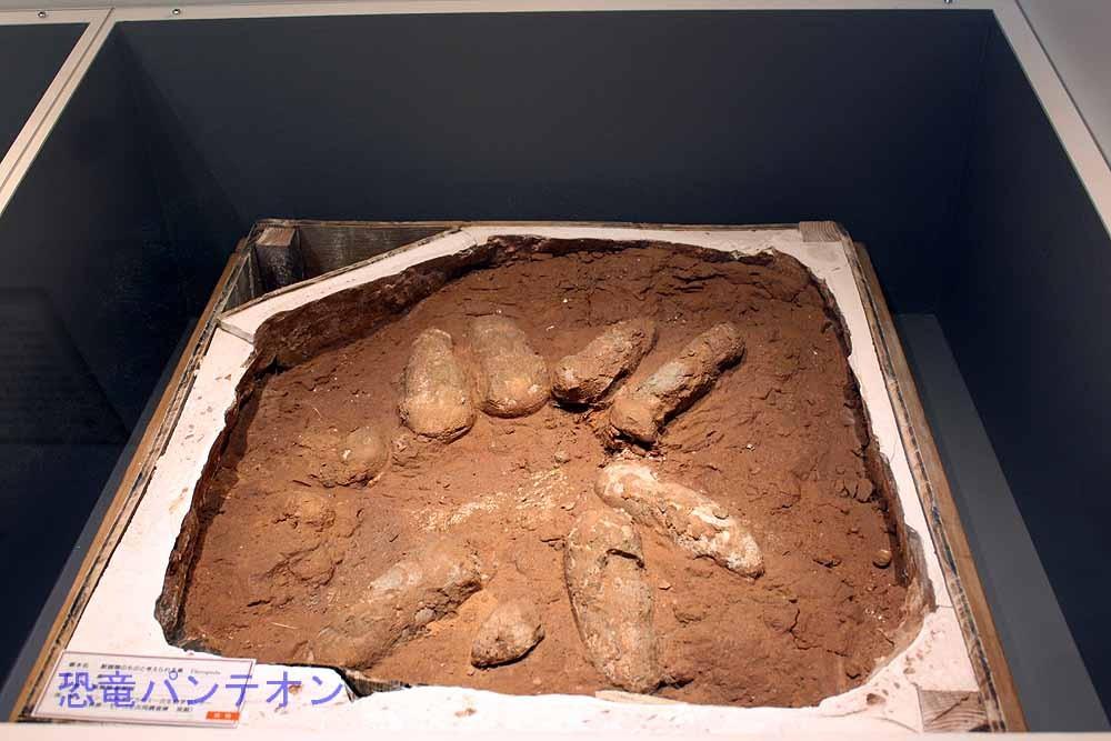 獣脚類のものと考えられる巣(実物化石)